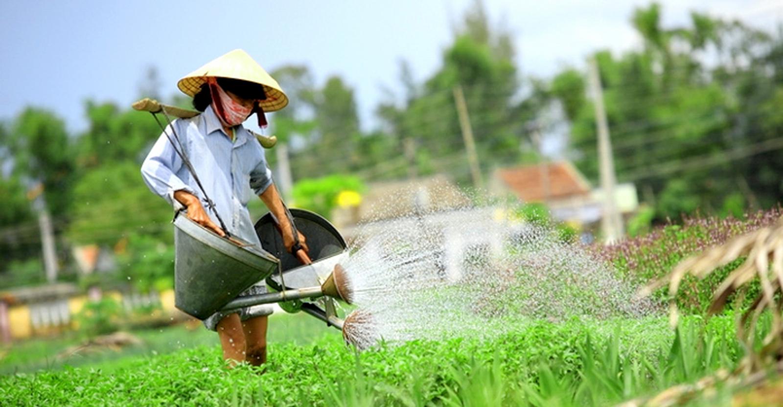 Trải nghiệm công việc trồng rau tại Làng rau Trà Quế Hội An
