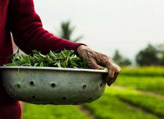trải nghiệm làng rau trà quế