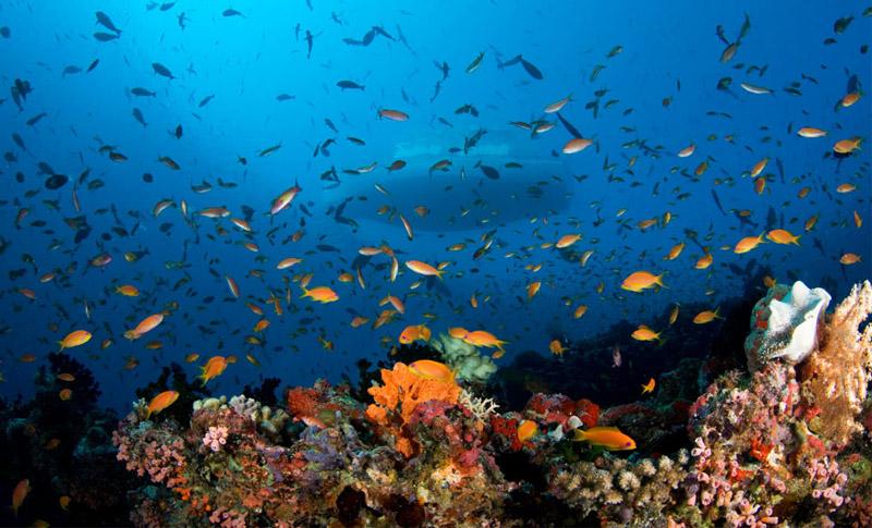 địa điểm lặn biển không thể bỏ qua