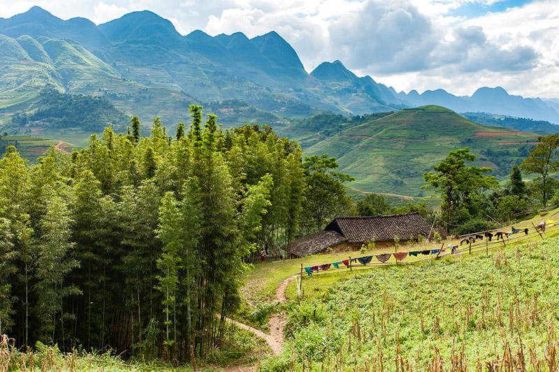 rừng tre ở yên Minh