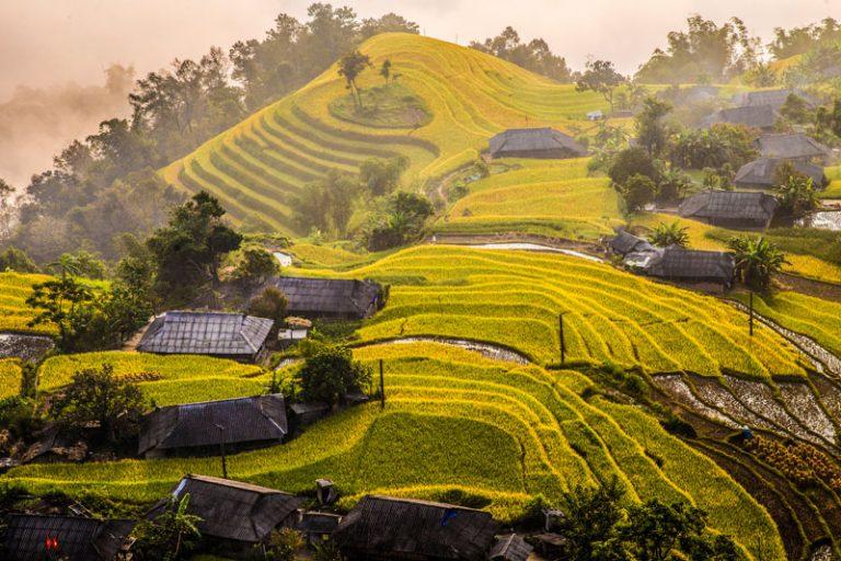 Ruộng bậc thang Hoàng Su Phì đẹp ngỡ ngàng mùa lúa chín