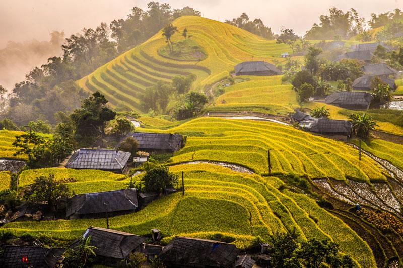 Ruộng bậc thang Hoang Su Phì mùa lúa chín