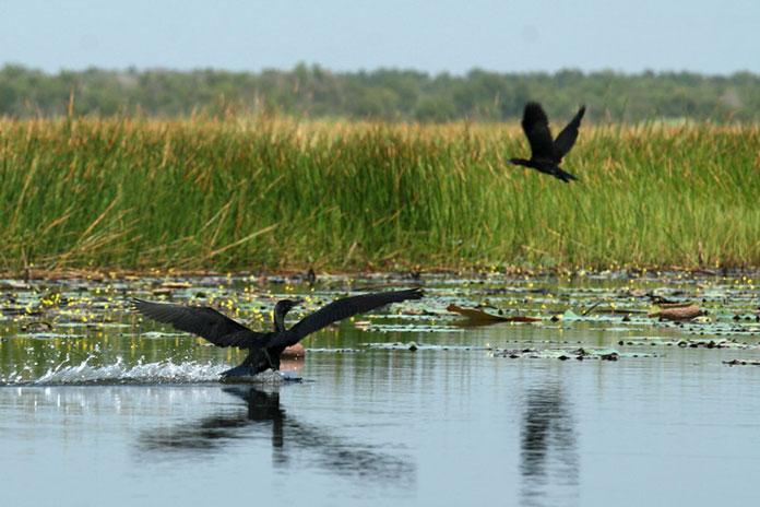 Khám phá các loài chim ở Gáo Giồng