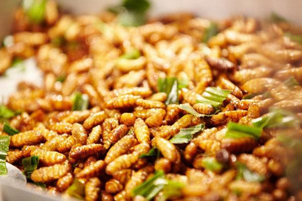 Nhộng ong rừng xào mùng đặc sản Mù Cang Chải
