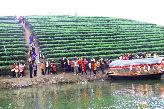 đồi chè Thanh Chương ở Nghệ An: di chuyển đến đồi chè
