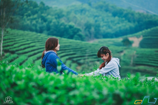 đồi chè Thanh Chương ở Nghệ An
