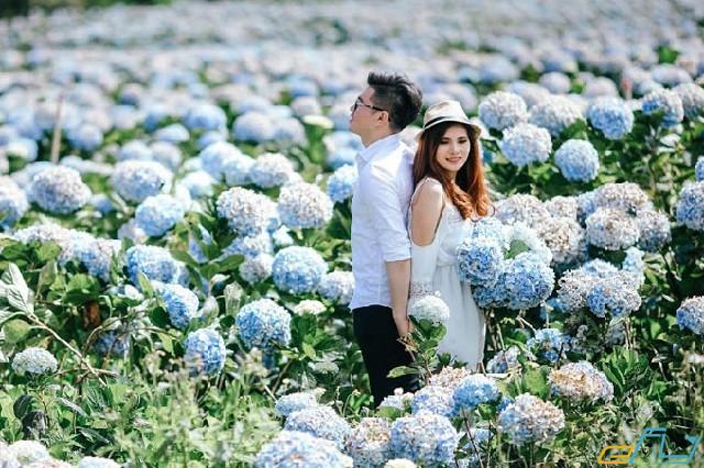 địa điểm du lịch gần nhau ở Đà Lạt: cánh đồng hoa cẩm tú cầu ở cầu mới