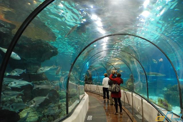 hà nội và các địa điểm ưu thích: vinpearl aquarium times city
