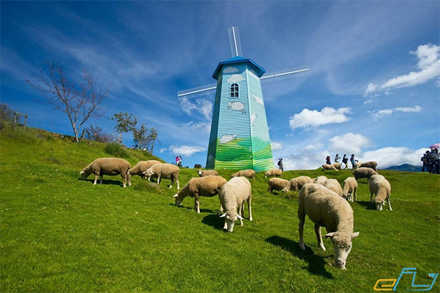Du lịch trại cừu Yên Thành Nghệ An