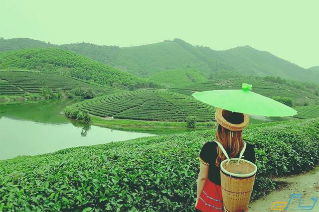 kinh nghiệm du lịch mùa đông ở Nghệ An: đồi chè thanh chương