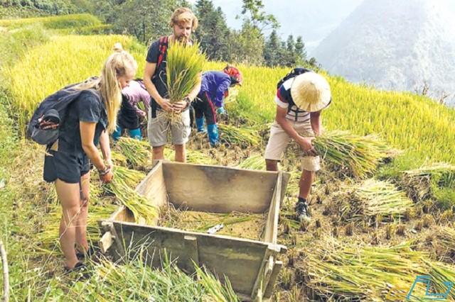 trải nghiệm một ngày với nghề nông của người nông dân thung lũng mường hoa sapa