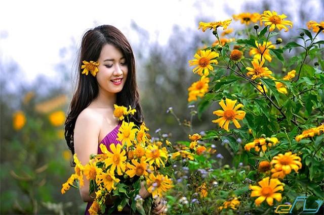 du lịch mộc châu mùa hoa dã quỳ