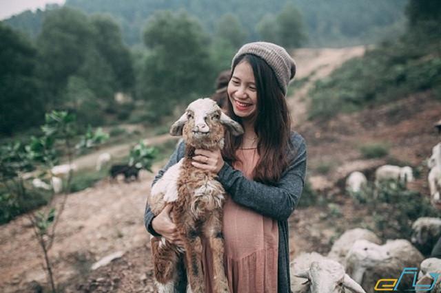 Du lịch trại cừu Yên Thành Nghệ An 2018