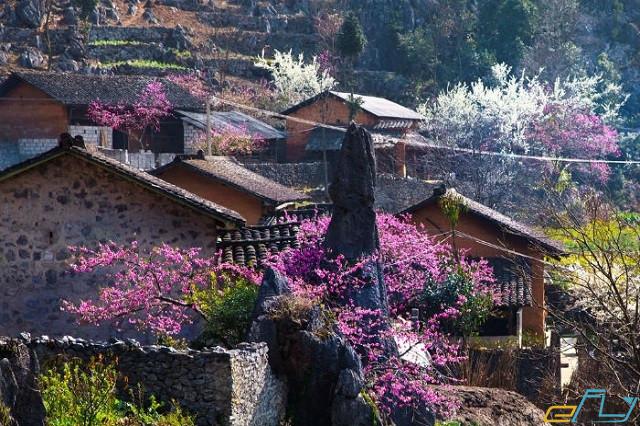 Hướng dẫn du lịch Sapa mùa xuân năm 2021