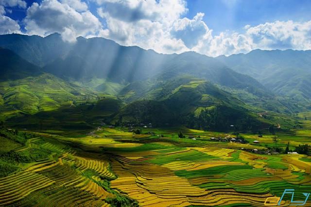 Kinh nghiệm du lịch Hòa Bình: ruộng bậc thang lúa chín vàng