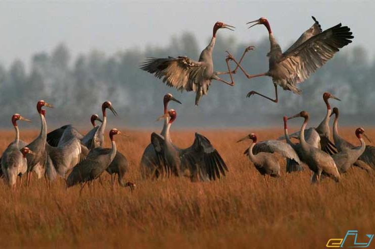 vườn quốc gia tràm chim miền tây