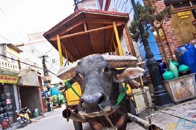 khám phá tại làng nghề gốm Bát Tràng: trải nghiệm đi xe trâu