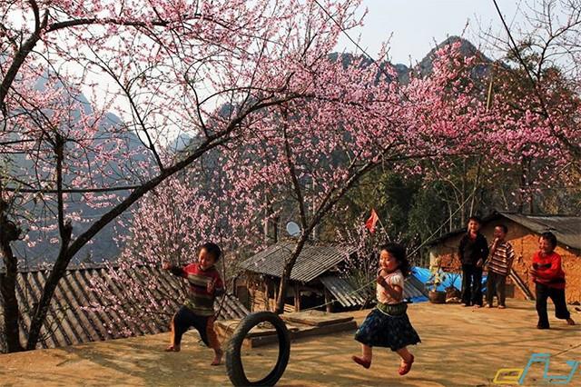 mùa hoa đào trần ngặp khắp làng bản sapa