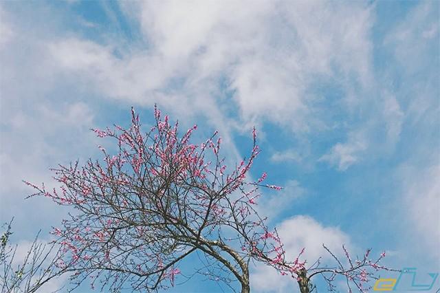 Dạt dào cảm xúc với những mùa hoa tuyệt đẹp ở Sapa