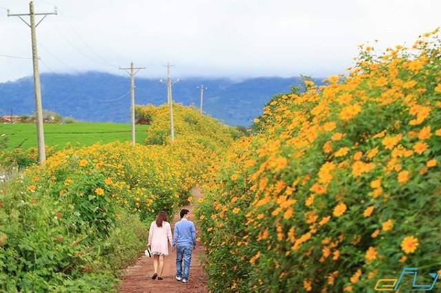 Con đường đất phủ đầy hoa dã quỳ