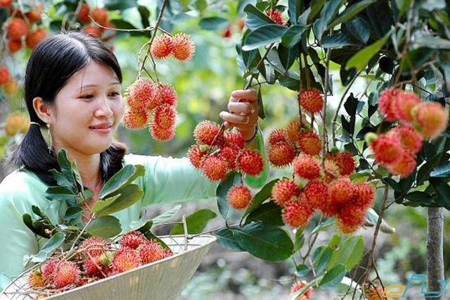 Oanh tạc 3 vườn trái cây nổi tiếng sát vách Sài Gòn trong mùa trái cây ở miền tây