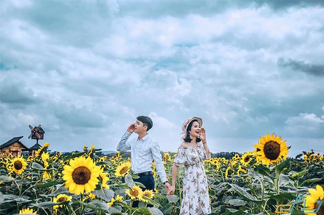 địa điểm du lịch ở Bắc Giang cánh đồng hoa hướng dương