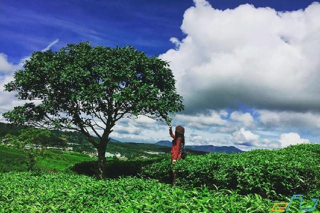 Săn lùng những địa điểm du lịch Mộc Châu, Sơn La được yêu thích nhất