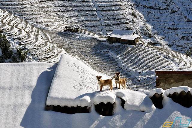 ruộng bậc thang sapa màu tuyết rơi