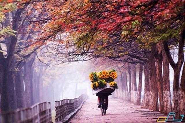 du lịch hà nội mùa đẹp nhất