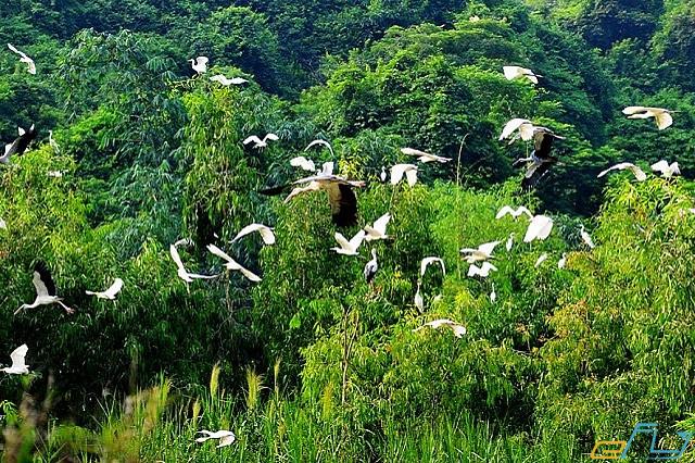 điểm đến du lịch bạc liêu: vườn chim bạc liêu