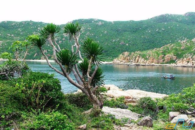 địa điểm du lịch Ninh Thuận: vườn quốc gia núi chúa