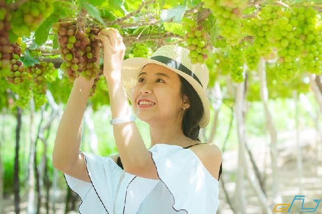 cẩm nang kinh nghiệm du lịch Ninh Thuận 2018: vườn nho ba rọi