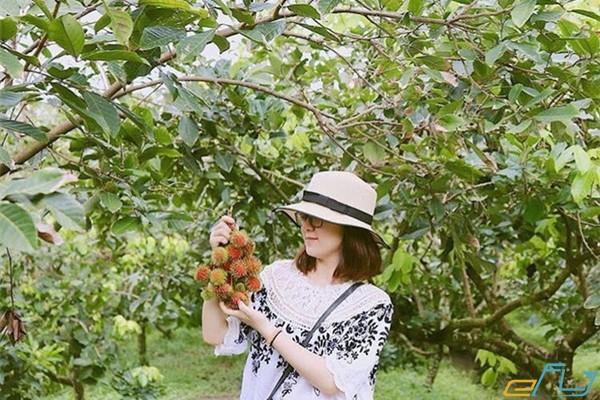 Đi du lịch vào mùa trái cây ở miền Tây là điều vô cùng hấp dẫn