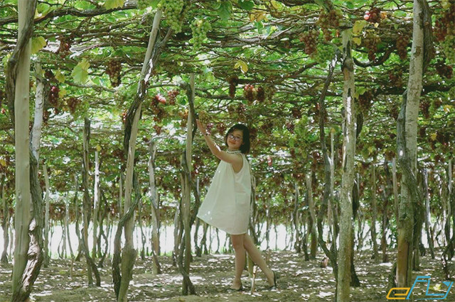 địa điểm du lịch vườn nho Ninh Thuận